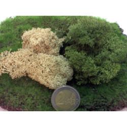 Hierba verde, Marca Joefix, Ref: 121.