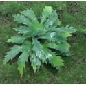 Vegetación gruesa, Marca Joefix, Ref: 201.