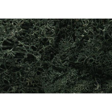 Liquen natural, musgo verde oscuro, Ref: L164