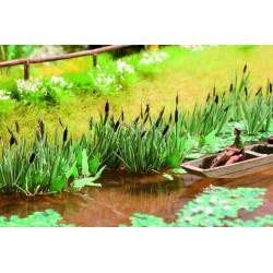 Plantas para orillas de rios, charcas o lagos, Noch, Ref: 14608.